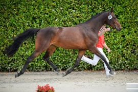 MISS SWISS: GOOD RESULTS FOR OUR STALLIONS' DAUGHTERS!