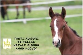 TANTI AUGURI DI BUONE FESTE A TUTTI!
